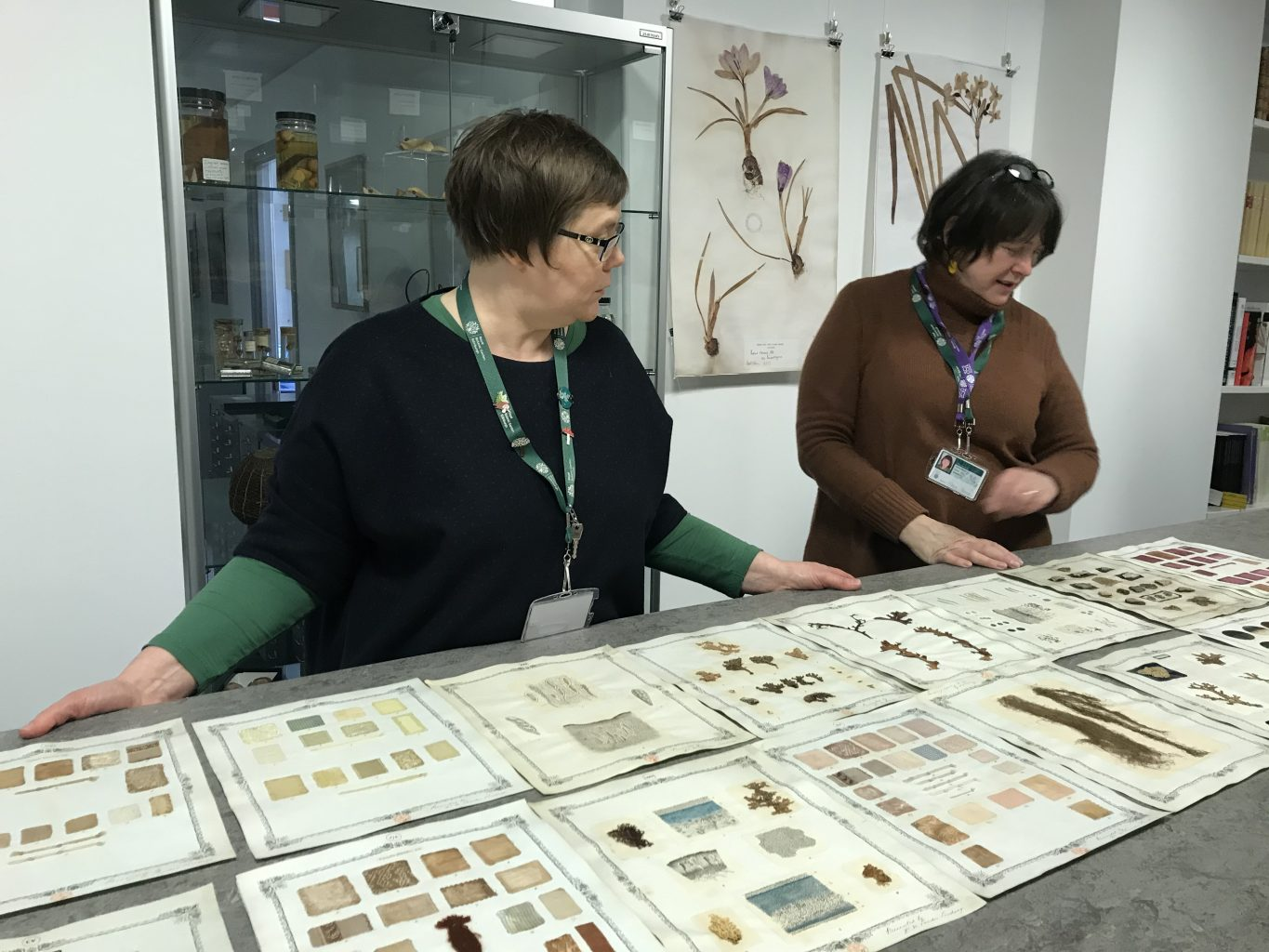 Two women standing at a high surface viewing A4 sized painted botanical studies, with botanical paintings and a display case on the wall behind